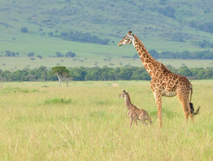 Amboseli, Ol Pejeta, Lake Elmenteita and Masai Mara