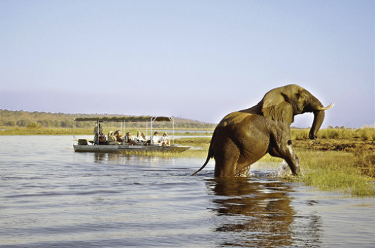 Day Trip to the sensational Chobe National Park
