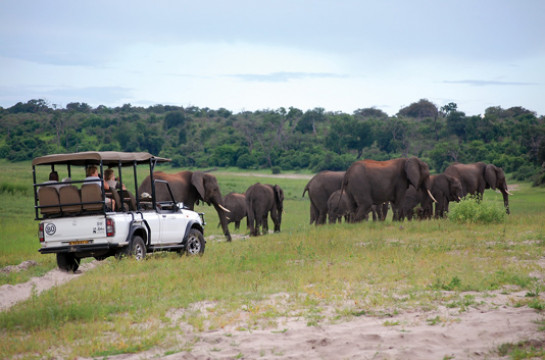 Explore Stunning National Parks in an Open Vehicle Safari