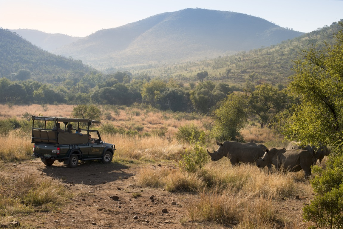 Safari: Pilanesberg