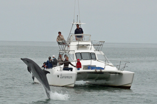Set off on a unique marine cruise in Walvis Bay