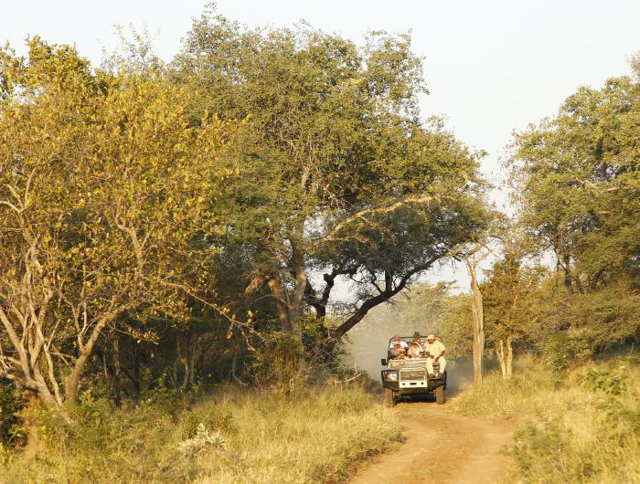 Safari: Kruger
