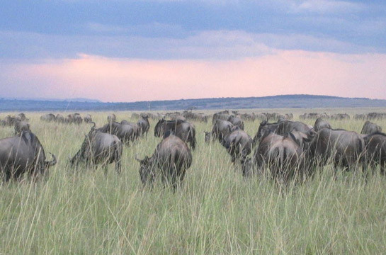 The ultimate safari experience – watch the Migration