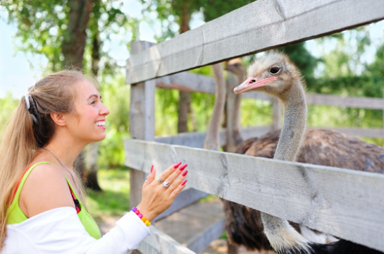 Tour an authentic, working ostrich farm in Oudsthoorn
