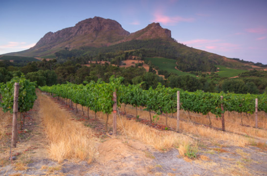 Tour the Cape Winelands and taste outstanding wines