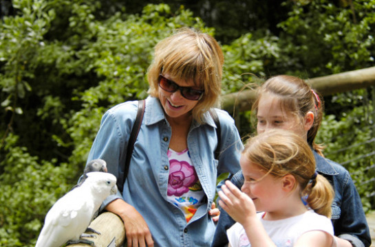 Walk amongst exotic birds and primates at Birds of Eden and Monkeyland