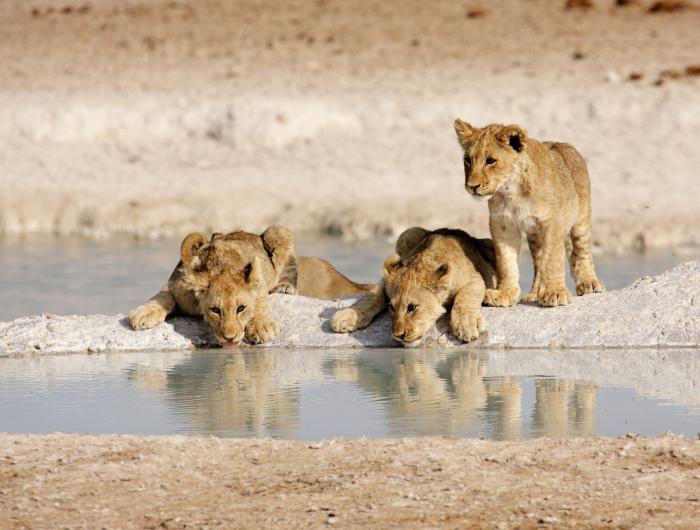 Sossusvlei, Swakopmund, Damaraland and Etosha