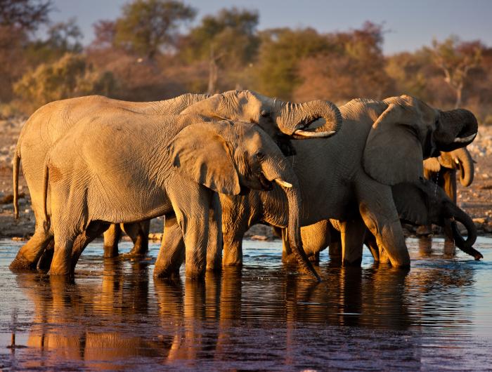 Safari: Etosha