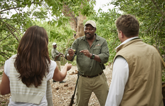 Set out on intrepid guided bush walks and game-tracking activities