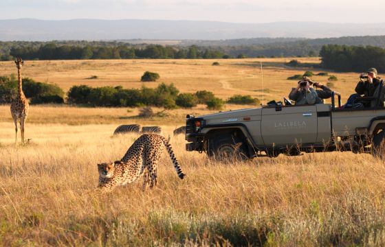 Encounter the Wild on morning and afternoon game drives
