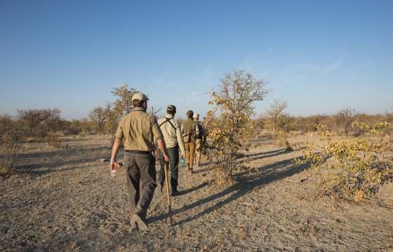 Set out on intrepid guided bush walks and game-tracking activities (Etosha)