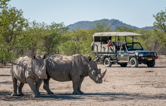 Encounter the Wild on morning and afternoon game drives (Etosha)
