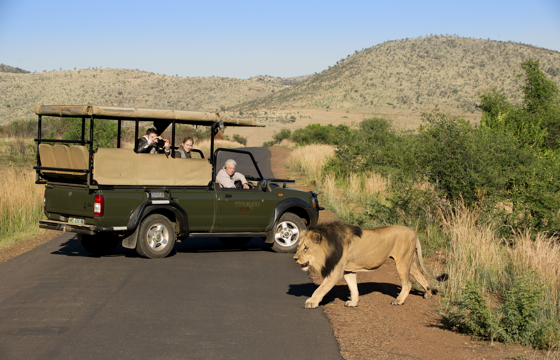 Encounter the Wild on morning and afternoon game drives (Pilanesberg)