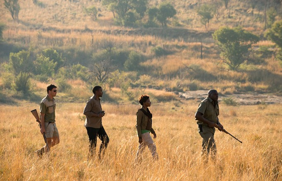 Set out on intrepid guided bush walks and game-tracking activities (Pilanesberg)